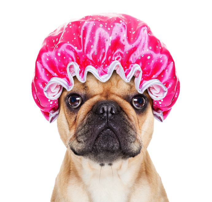 Dog Grooming Basics: What you need to know! - Bow-Wow Pets |Dogs Grooming